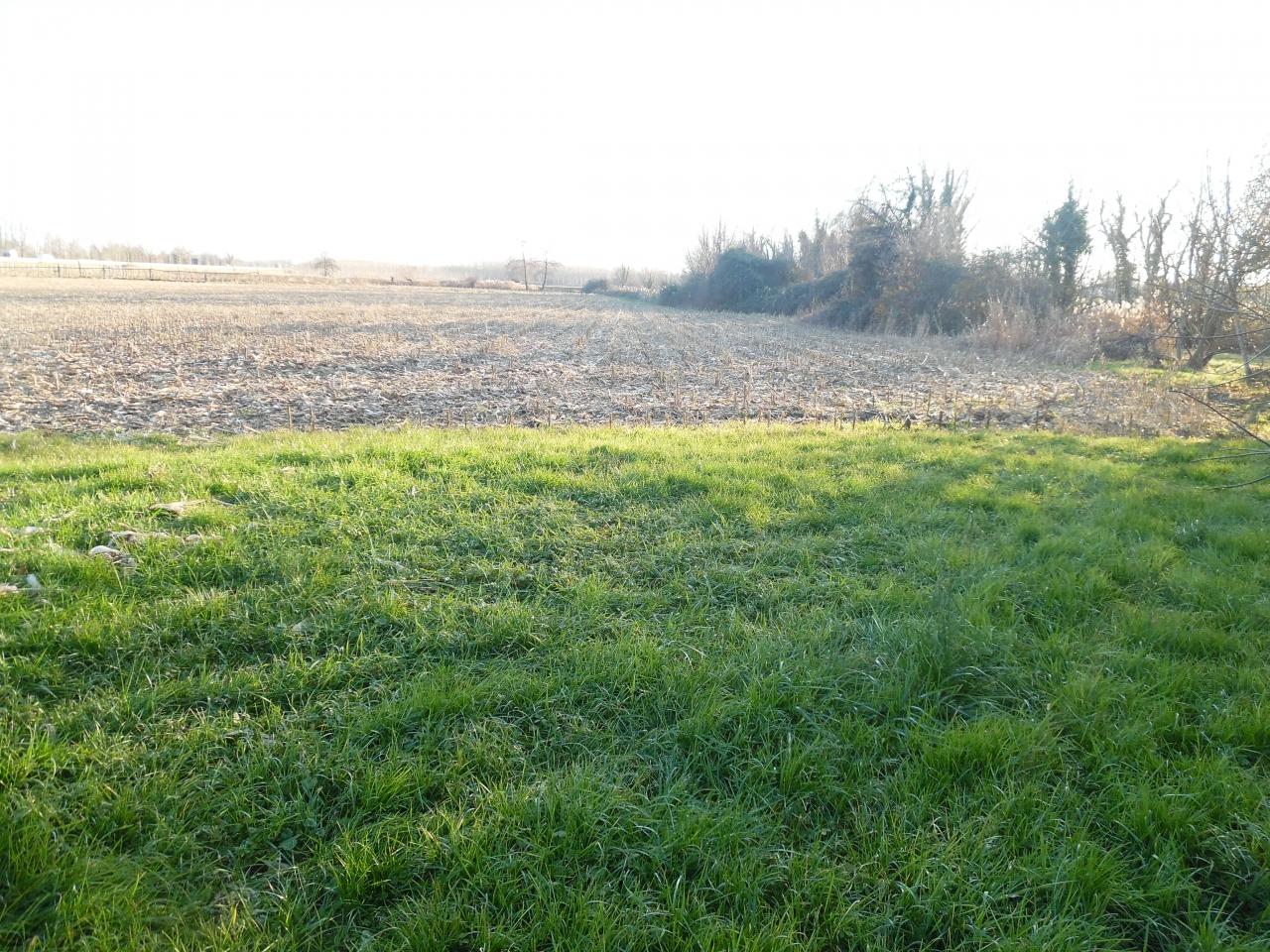 Terreno agricolo in vendita a Buja - Slideshow 2